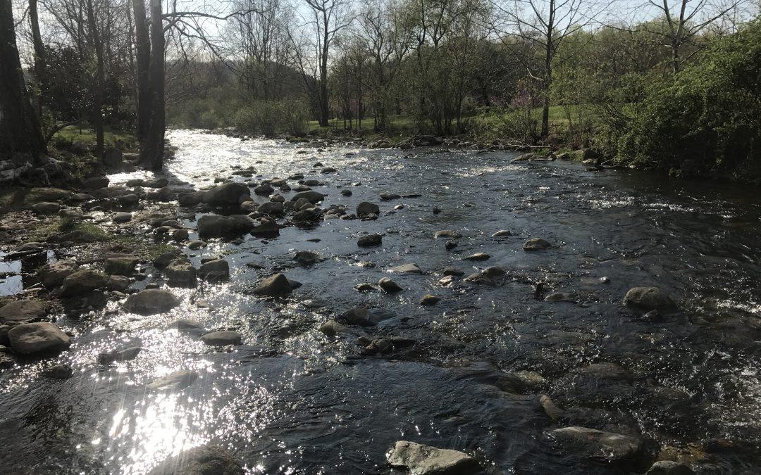 Rose River Student Stream Assessment
