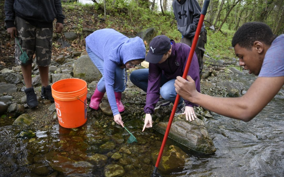 Brook Trout Released in Rappahannock Headwaters