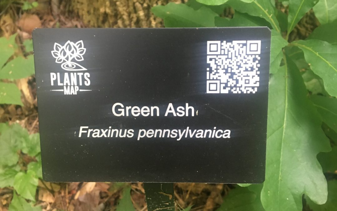 Get to know a plant: Plant's Map at FOR