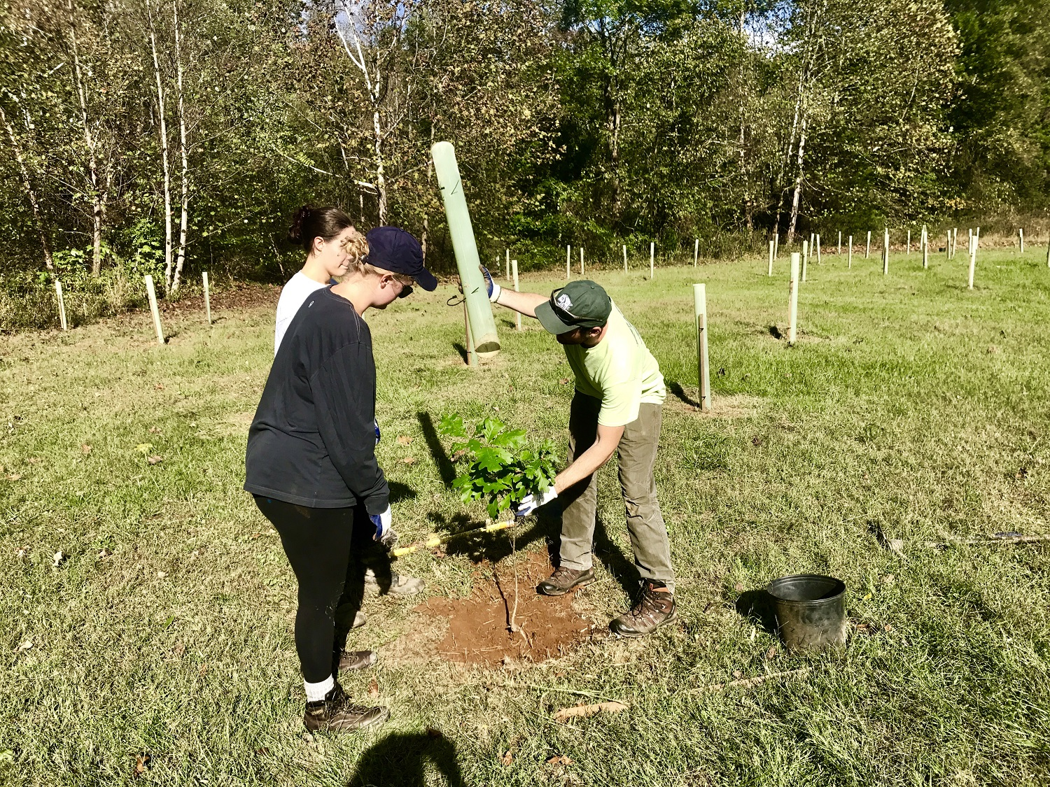 volunteers needed for tree planting friends of the rappahannock