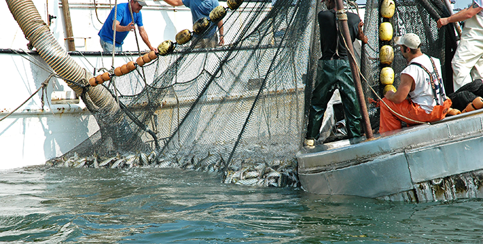 Anglers, Charter Boat Captains, and Conservation Groups Highlight Urgency of Menhaden Legislation
