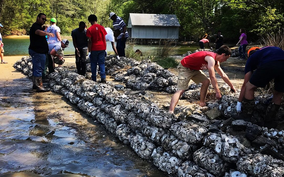 Students work hard to install a living shoreline