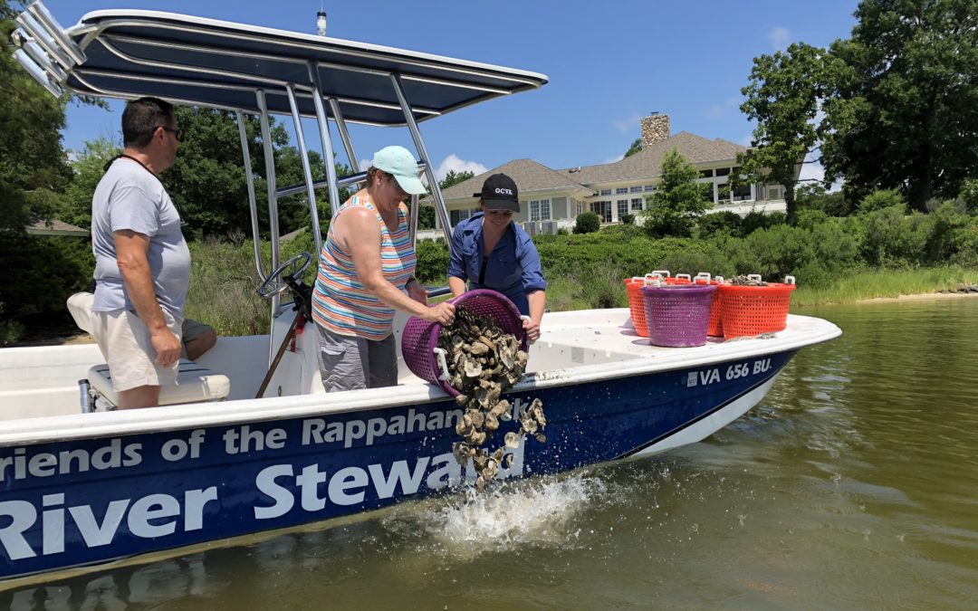Oyster Restoration VIP River Experience