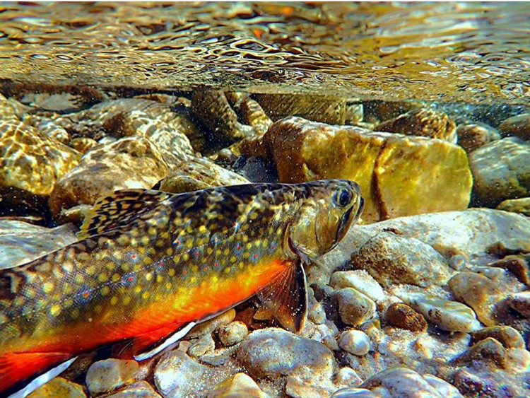 Reconnecting and Restoring Stream Habitat to Increase Fish Populations: OUR COMMON AGENDA