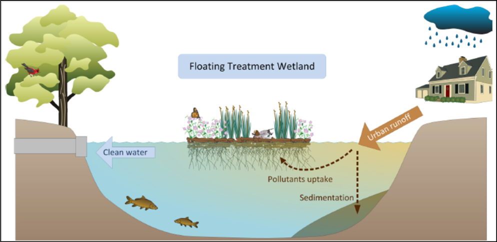 Diagram Of Wetland Wiring Diagram Site